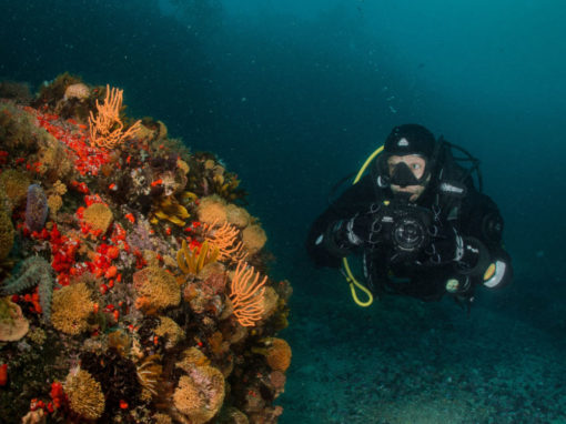 Cape Town Dive Centre | PADI Deep Diver