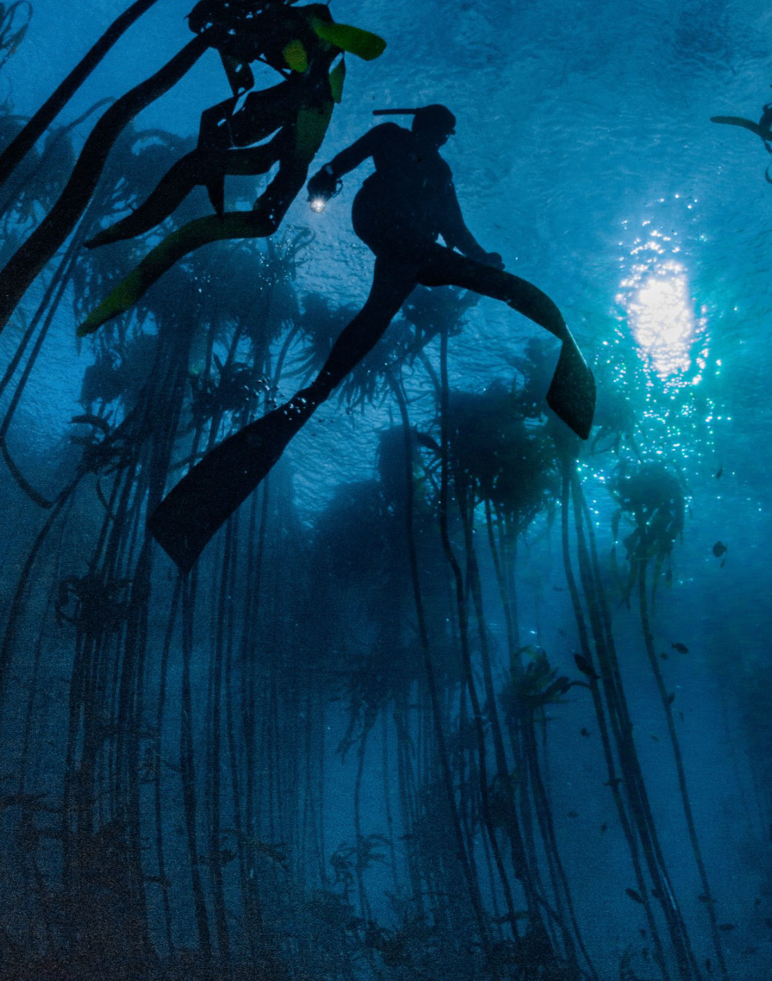 PADI Instructor Development Course: Diver in Kelp forest