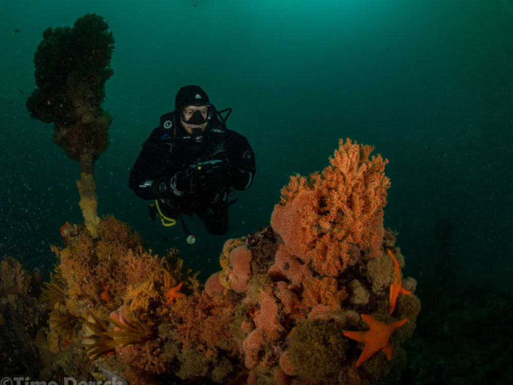 Cape Town Dive Centre | PADI Digital Underwater Photographer Course
